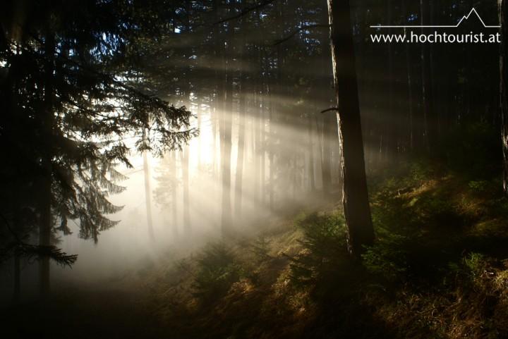 Am Abstieg nach Payerbach nähern wir uns dem Nebel. Die Elfen und Kobolde im Wald sind kurz vor dem Foto verschwunden, ehrlich.