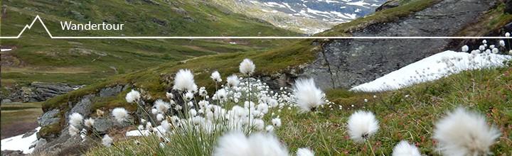 Into the wild! Wandern im Aurlandsdalen
